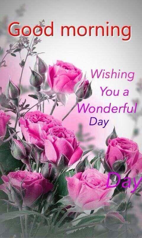 Good Morning Sunday Non Veg Images : Good morning and wish you a wonderful day