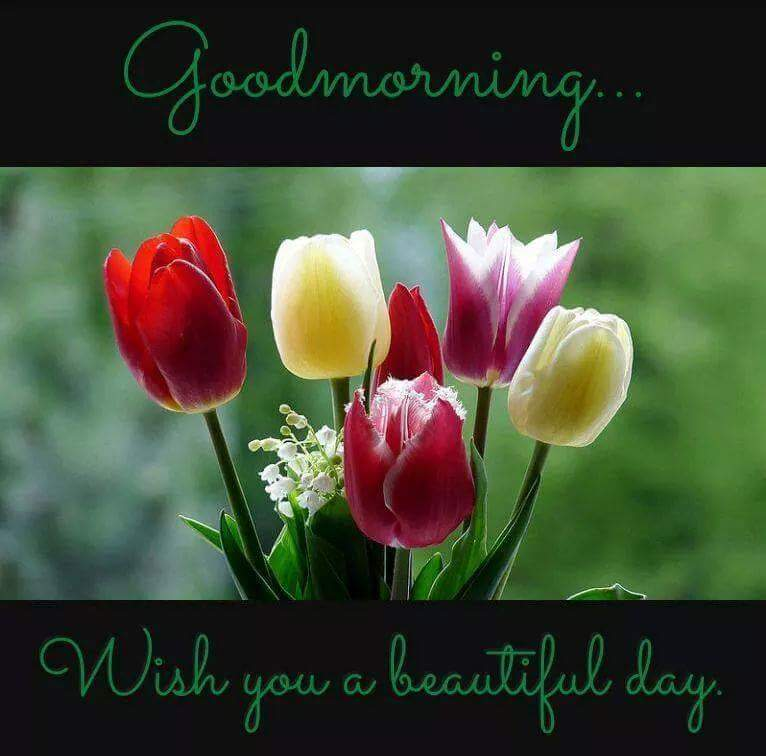 Good Morning Sunday Non Veg Images : Good morning wishes for a beautiful day